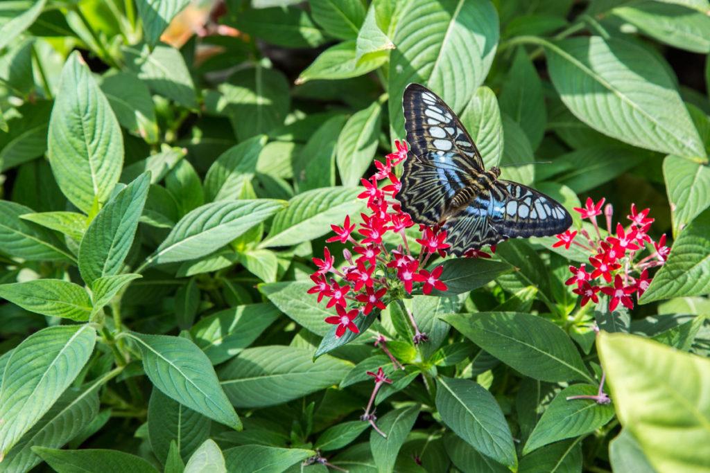 Сад тропических бабочек в Конье